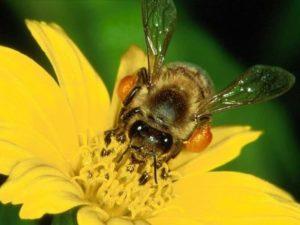 Протиройові способи бджільництва