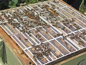 Роздільні грати для бджіл