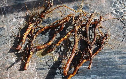 Розмноження кущів малини за допомогою кореневих відростків