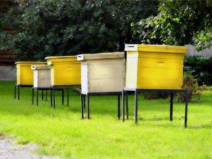 Розведення бджіл вдома
