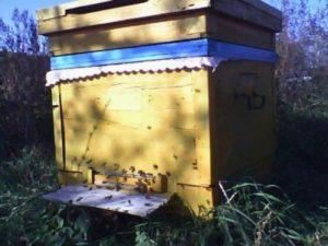 Скільки бджіл в одному вулику