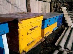 Сверхранній обліт бджіл