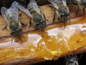 Цукрова помадка бджолам