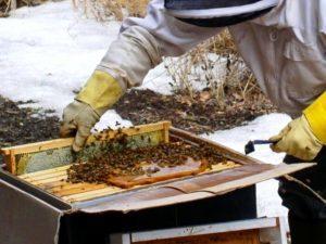 Як доглядати за бджолами навесні