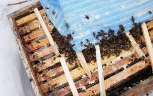Відкрите годування бджіл