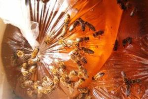 Закрите годування бджіл