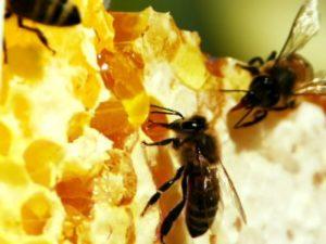 Годування бджіл