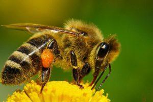 Варіанти годування бджіл: відкритий і закритий