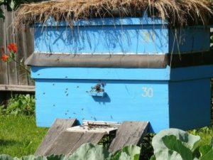 Як завести бджіл