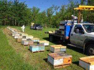 бджільництво США