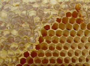 Незапечатаний мед