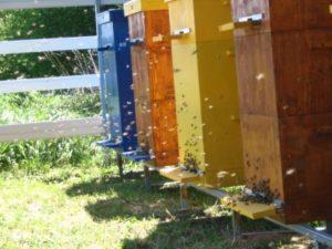 Як зібрати бджолиний вулик своїми руками