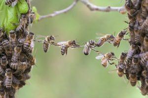 На пасіці почалося бджолине злодійство