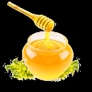Що лікує мед з буркуну