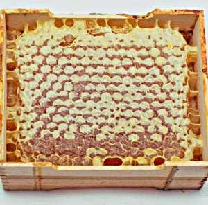 Стільники з медом