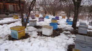 коли виносити бджіл із зимівника