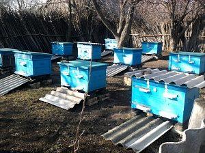 Виставка бджіл із зимівника навесні