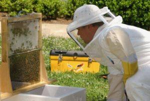 Об'єднання бджолиних сімей перед медозбором