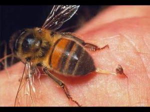 Застосування бджолиної отрути проти цукрового діабету