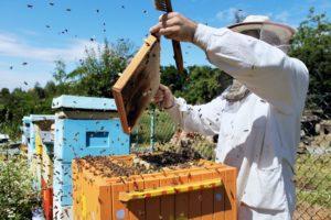 Об'єднання бджолиних сімей медозбор
