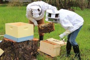 Об'єднання бджолосімей медозбор