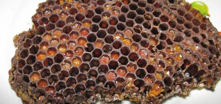 Чим можна замінити пергу для бджіл