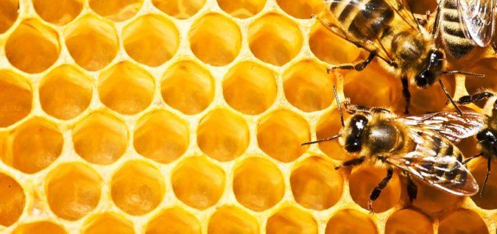 Основи бджільництва для початківців