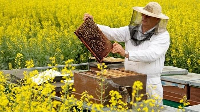 Вибір бджіл для пасіки