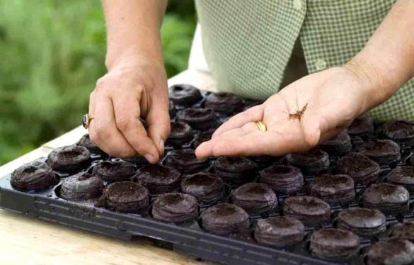 Как определить качество семян