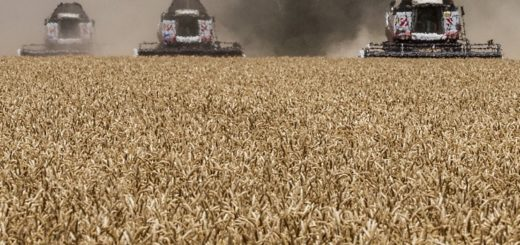 Стратегии торговли зерном